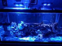 125 gallon reef ready saltwater setup Columbus, 31904