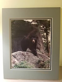 black bear near tree photo with gray frame Waynesboro, 22980