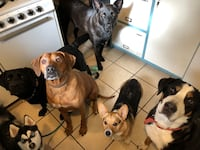 Pet sitting Arlington