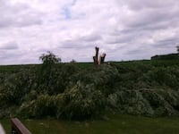 Storm damage Trees Des Moines, 50313