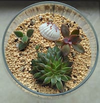 Beautiful Succulent Garden Price Start Price Start From $5 Only