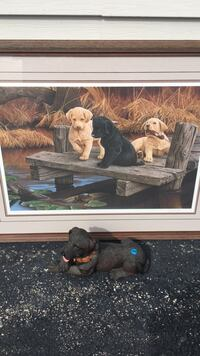 three tan and black labrador puppies on wooden dock photo with brown wooden frame