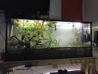 55 gallon long (2x) w/ custom rack stand, (4x) top and lights included San Francisco, 94118