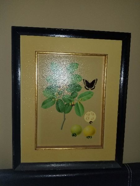 green guava plant with black butterfly painting Houston