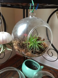 Air plant in glass bulb Germantown, 20874