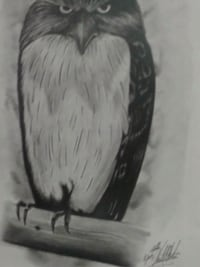 Matted hand drawn OWL pencil portrait