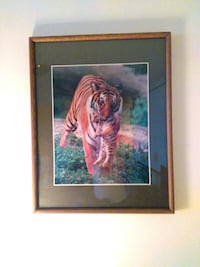 Tigers picture Toronto, M9A 4M6