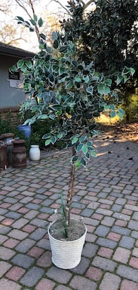 Artificial tree about 6 ft tall.  In nice shape with real wood branches
