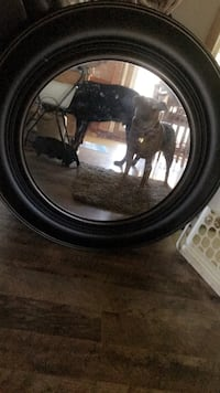 large mirror (dog not included) Joliet, 60431