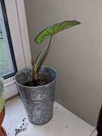 green potted plant London