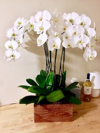 Blooming Orchids San Jose, 95125