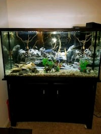 rectangular black framed fish tank Los Angeles, 91306