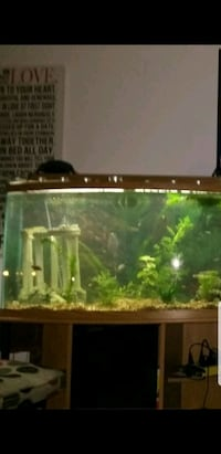 46 gal bowfront tank /stand New Westminster, V3M 1V9