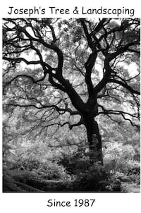 black and white tree painting San Antonio, 78257