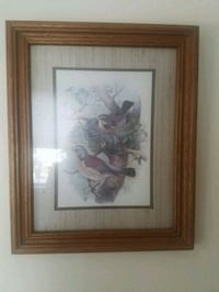 Framed bird print Manassas, 20111