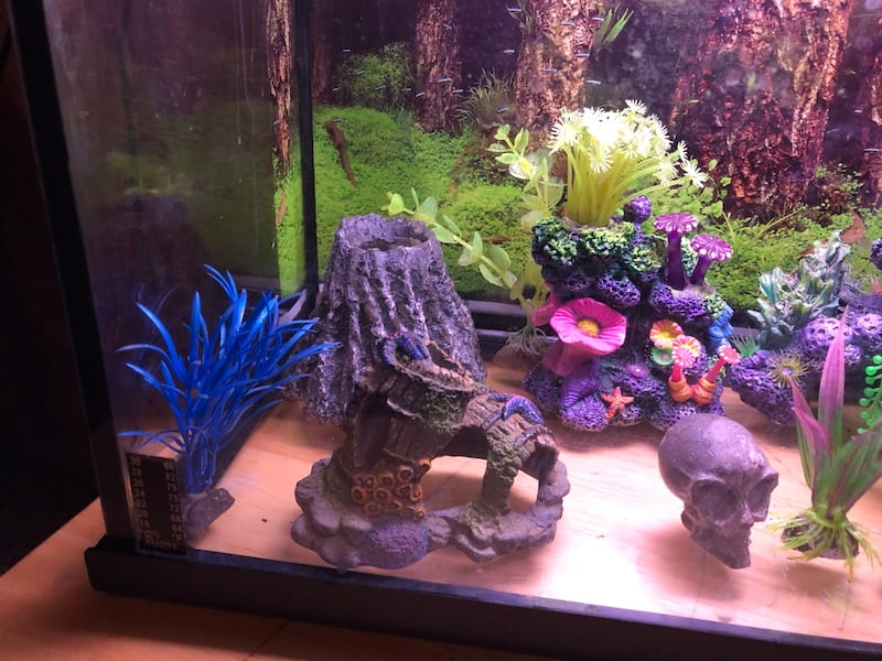 10 gallon fish tank complete set up with decorations, fake coral, plants, rocks, filter and 5 fish!!! 532521b7-f752-42a2-a564-408a08dbc0ca