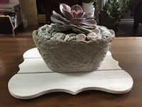 BEAUTIFUL HEALTHY EASY TO CARE SUCCULENT IN A SHABBY CHIC POT New Westminster, V3M