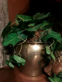 green leaf plant and brass-colored pot Springfield, 65802