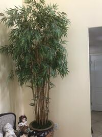 Asian pot, plant, stand. 8/9ft tall. Chatsworth, 91311