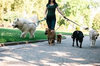 Dog walking Mississauga