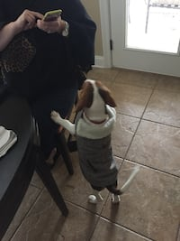 Dog Jacket S/M Southaven, 38672