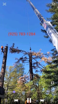Hazardous Tree Removal Same day Service Fairfield