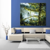 Stunning 4'x4' Fine Art Canvas Print, Fog and Rain Lifting Off Forest In Sooke Victoria