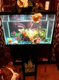 Fish tank with 2 angel fish. Decorations and stand Columbia, 29204
