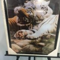 Picture of a Tiger Family Clarksburg