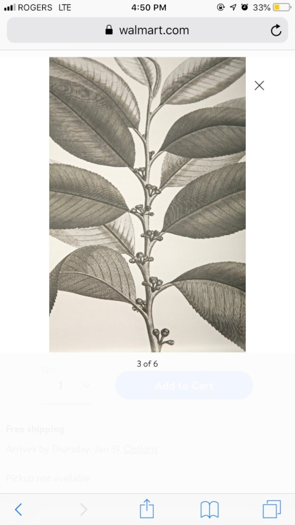 IMAX Aba botanical wall prints - new in box 9e38c5bf-760e-4df6-b229-d92c2738babc