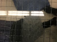 Tempered Wire Glass Toronto, M6H 1S7