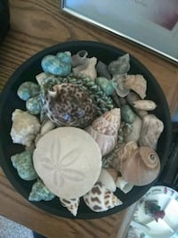 Seashells with Bowl Amarillo, 79118