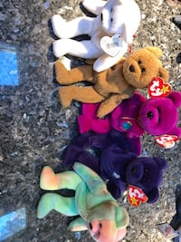 Lot of original and valuable beanie babies Cheshire, 06410