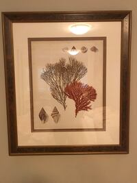 Wood framed, matted coral picture  Newport Beach, 92661