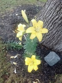 yellow and white petaled flower Franklin, 08322