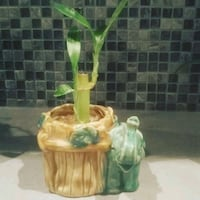 green leaf plant with brown ceramic pot Hampstead, H3X 1S2