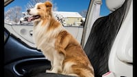 Water resistant car seat cover for pets - BRAND NEW