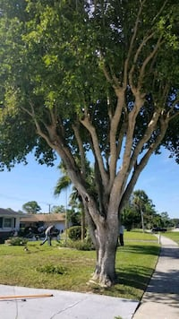 New Life Tree Services-Tree Trimming and Removal Boca Raton