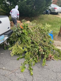 Lawn care and hauling service  Alexandria