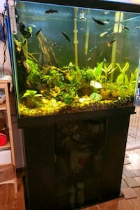 56 gallon fish aquarium w/fish and all extras
