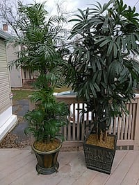 For sale artificial trees 75$ each..saving u 300  Mount Airy, 21771