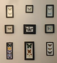 Framed Butterfly Collection Edmonton, T6L 1G7