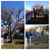 tree services landscaping Chillum, 20783