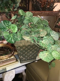 green leaf plant with brown pot