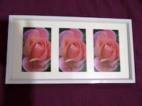 pink raindrop roses signed photography in frame London