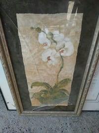white moth orchid painting