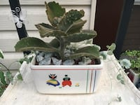 Large Succulent in Vintage Sovereign (Vitrified) with Decorative Silver Falls Plant Hamilton, L8H 2T4