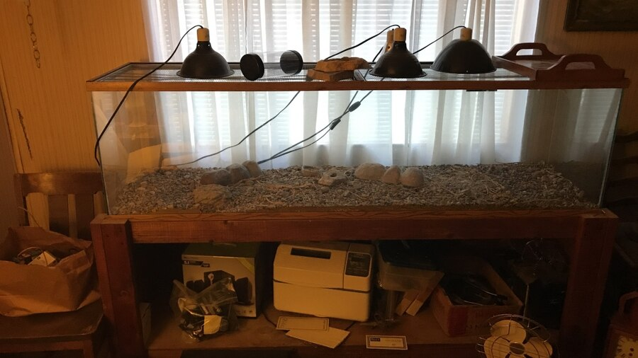 Reptile cage and shelf with lights. You haul. Actual tank is 71 inches in width , 76 in width for the stand and tank, and 50 inches in height for all