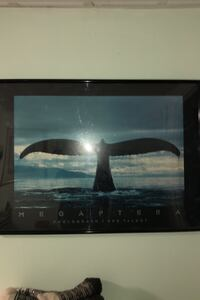 Framed and Matted WHALE TAIL print. Goffstown, 03045