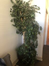 Large plant with vase!